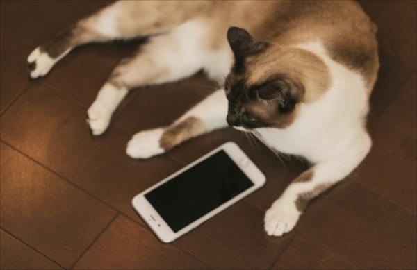 チャットレディ スマホと猫