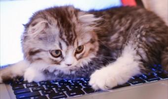 チャットレディ 猫の猫ちゃん